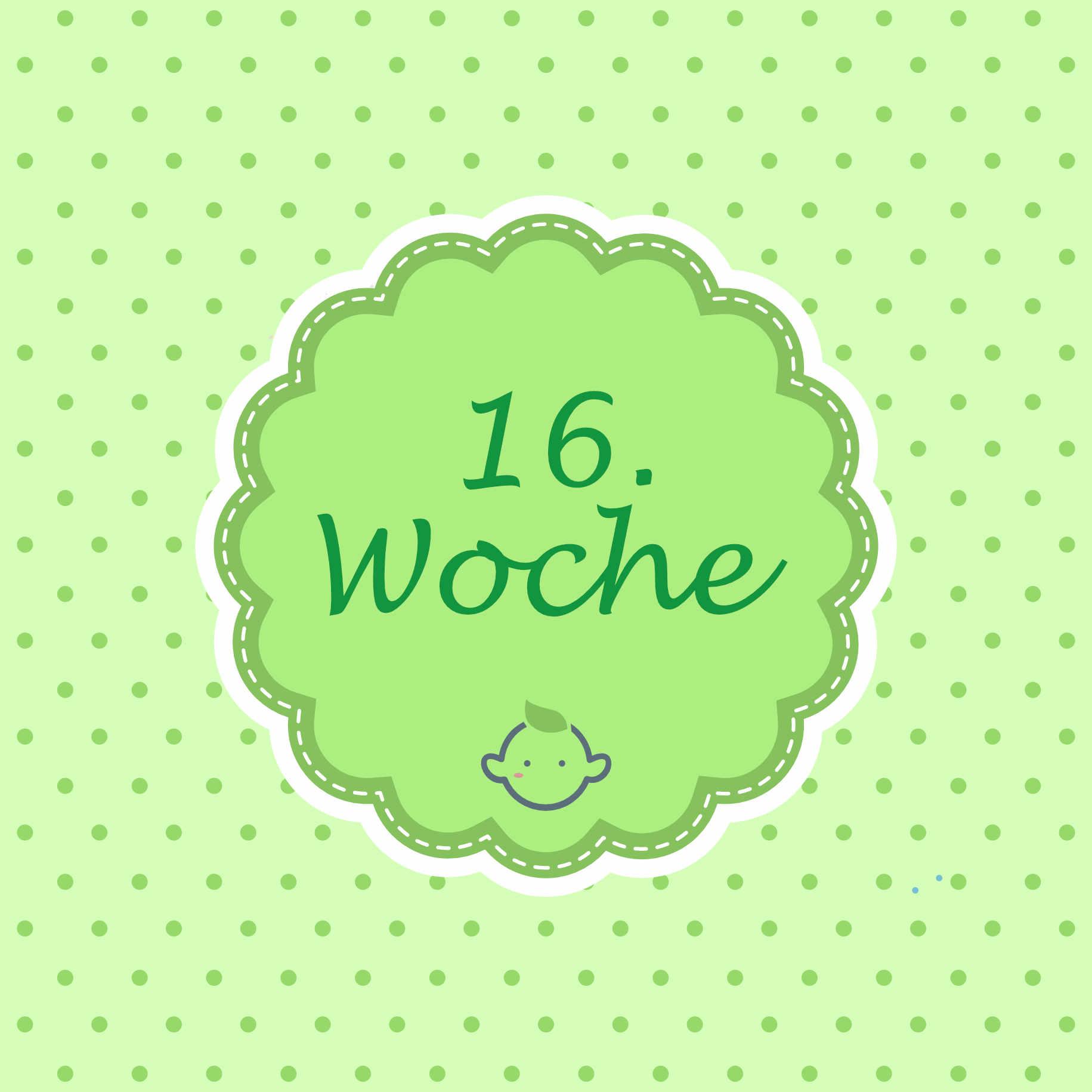 16  ssw    16  woche schwanger  u2013 dein schwangerschaftskalender